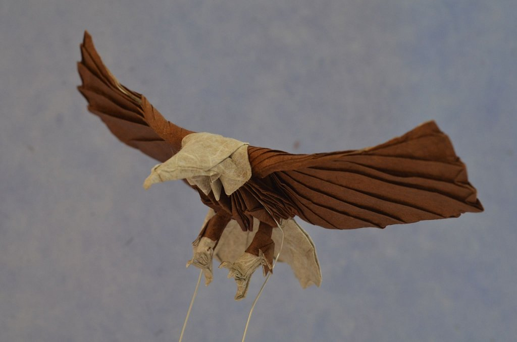 Bald Eagle 2